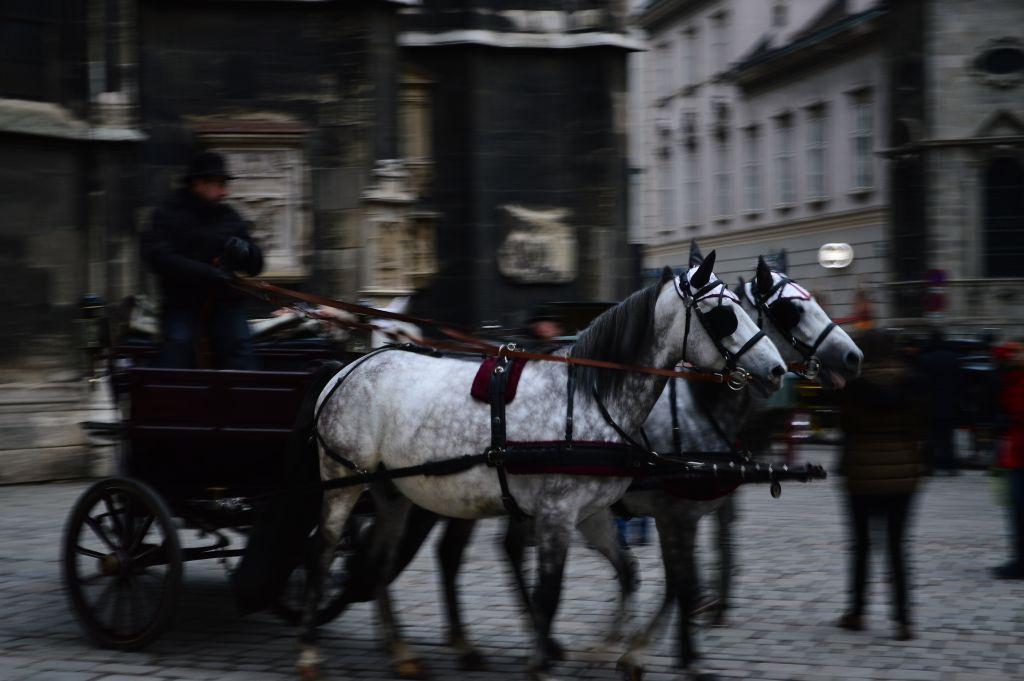 Horses on St Stephen's Square