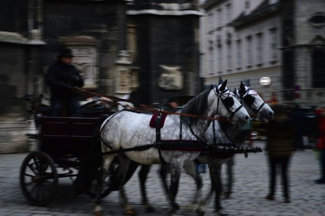 Horses on St Stephen's Square