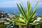 Mythical Capri