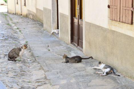 Lazy days in Draguć
