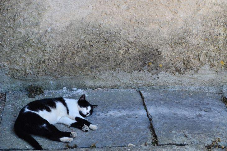 Lazy days in Sveti Lovreč