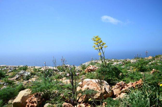 Dingli Cliffs, pt 1
