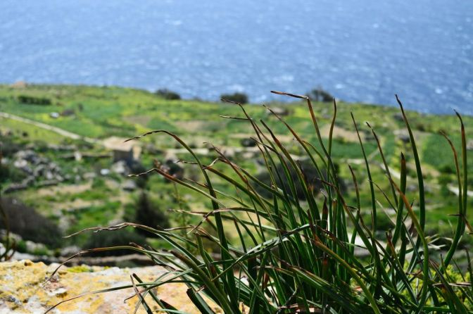 Dingli Cliffs, pt. 2