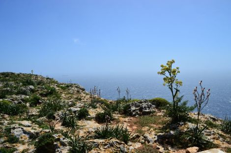 Dingli Cliffs, pt. 5