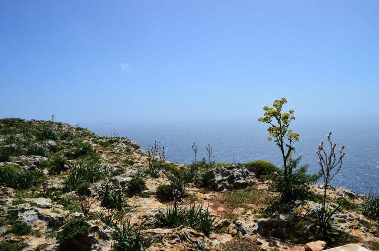Dingli Cliffs, pt. 5