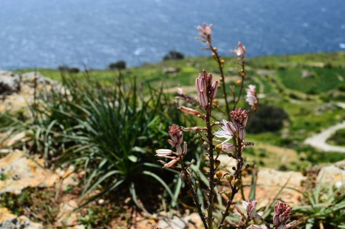Dingli Cliffs, pt. 6