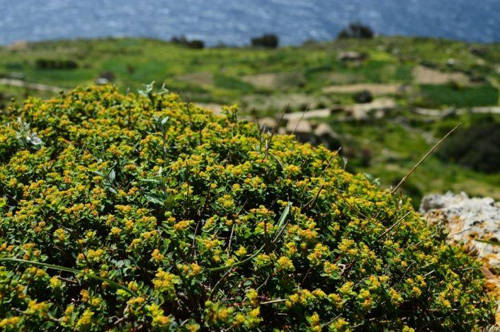 Dingli Cliffs, pt. 8