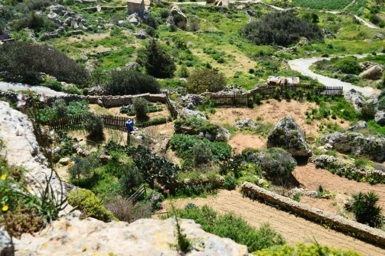 Terraced gardens under the Dingli Cliffs